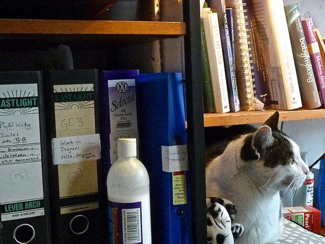 Photo of Bookshelf with cat sitting on it