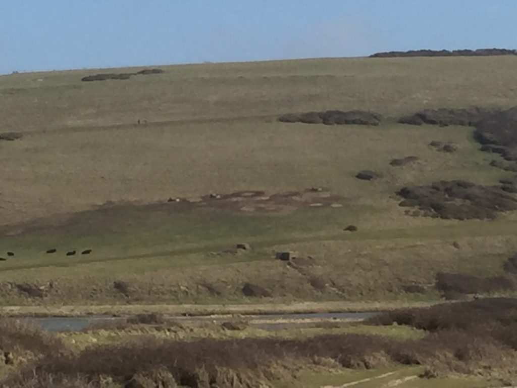 Images of Pillboxes on the Eastern Side of Cuckmere